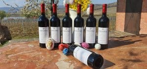 degustacny set cervených vín pavelka